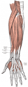 lateralepicondyle